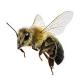 Stich einer Biene